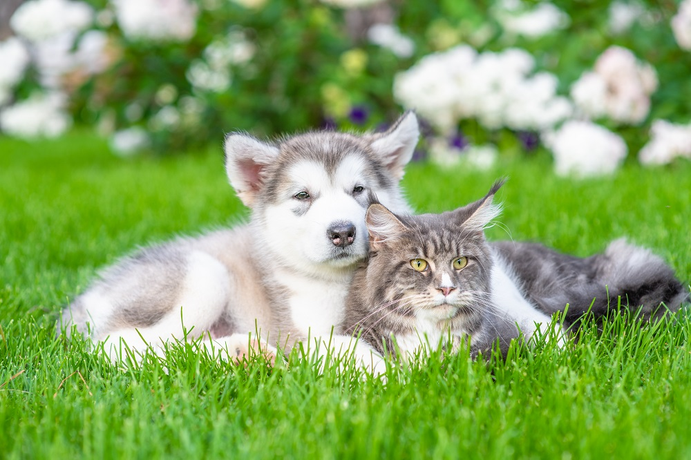 Can Dogs and Cats Mate? Ultimate Facts | Smart Cat Lovers