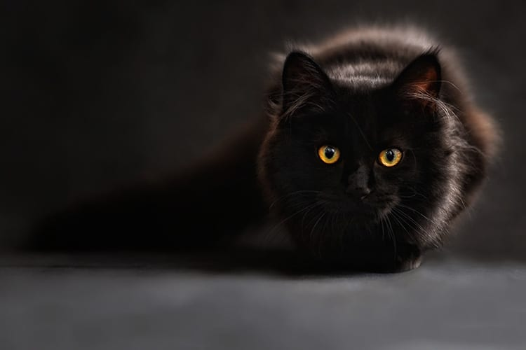 toxic-essential-oils-for-cats