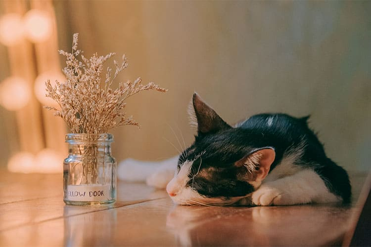 Is Catnip Bad for Cats