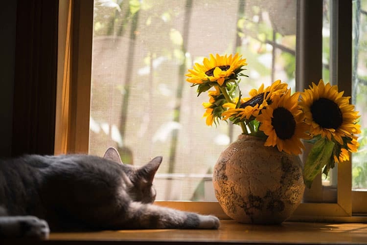 Poisonous Houseplants for Cats
