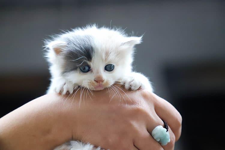 Prazosin for Cats