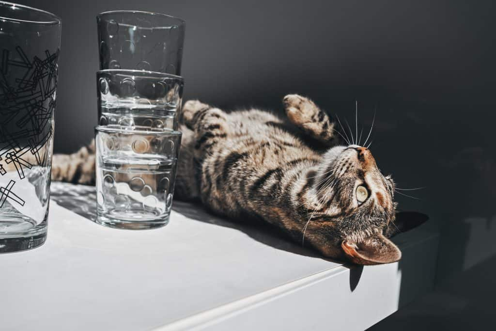 why won't my cat drink water from her bowl